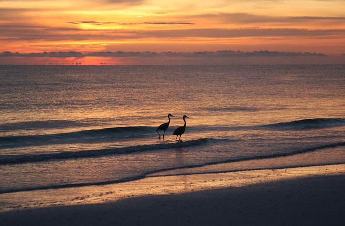 Marco-Island,-Florida
