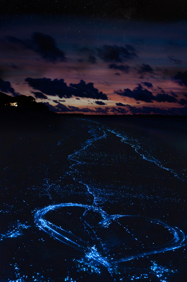 Bioluminescent Beaches