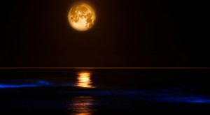 Bioluminescent Beaches