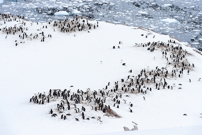 Icebergs, ice shelves and colonies of penguins in Antarctica.